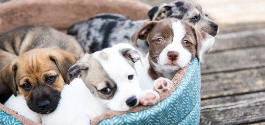 Cuidar de um cão
